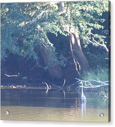 Ode The Great Blue Heron Acrylic Print by Debbie Nester