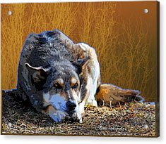 Ode To An Old Dog Acrylic Print by Renee Forth-Fukumoto