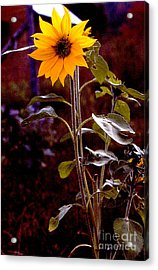 Ode To Sunflowers Acrylic Print by Patricia Keller