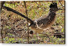 Off The Roadrunner Acrylic Print by David Pauley
