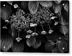 Off The Wall Acrylic Print by Don Powers