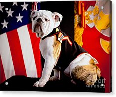 Official Mascot Of The Marine Corps Acrylic Print by Pg Reproductions