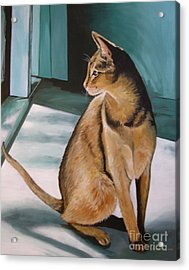 Oh Beautiful House Cat Acrylic Print by J Linder