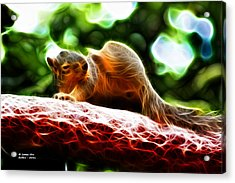 Acrylic Print featuring the digital art Oh Buggers I Itch - Fractal - Robbie The Squirrel by James Ahn