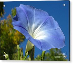 Oh Heavenly Blue 2 Acrylic Print