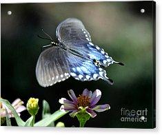 Oh Heavenly Garden Acrylic Print by Nava Thompson