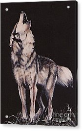 Acrylic Print featuring the painting Oh No....coyote Art by DiDi Higginbotham