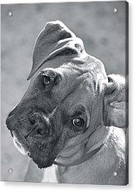 Oh Puppy Acrylic Print