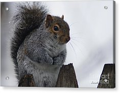 Oh So Cold Acrylic Print by Lorelle Gromus