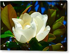 Oh Sweet Magnolia Acrylic Print