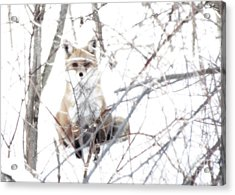 Oh They Can't See Me Acrylic Print by Deborah Johnson