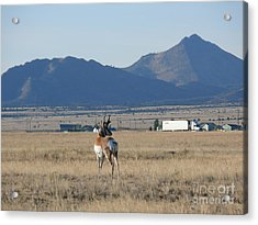 Oh Yes Acrylic Print by Jeff Pickett