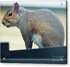 Ohhh I Ate Too Much Acrylic Print by Judy Via-Wolff