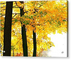 Ohio Autumn Acrylic Print