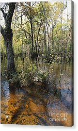 Ohoopee River, Georgia Acrylic Print by William H. Mullins