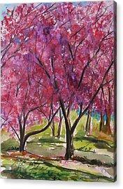 Okame Cherries Acrylic Print by John Williams