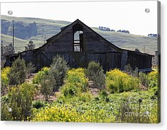 Old Barn In Sonoma California 5d22236 Acrylic Print by Wingsdomain Art and Photography