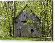 Old Barn In Spring Woods Acrylic Print by Alan L Graham