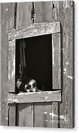 Old Barn Window Acrylic Print by Tim Good