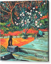 Old Bear Cat And Blooming Magnolia Tree Acrylic Print by Asha Carolyn Young