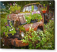 Old Truck Betsy Acrylic Print by Mike Reid