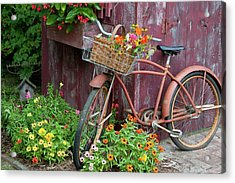 Old Bicycle With Flower Basket Next Acrylic Print