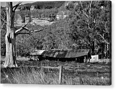 Old Bush Shed Acrylic Print
