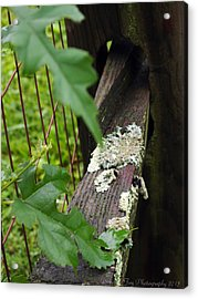 Old Country Fence Acrylic Print by Deborah Fay