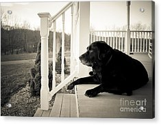 Old Dog On A Front Porch Acrylic Print by Diane Diederich
