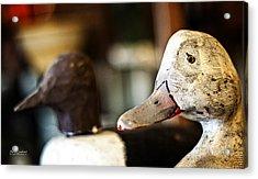 Old Duck Decoys Acrylic Print