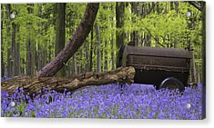 Old Farm Machinery In Vibrant Bluebell  Spring Forest Landscape Acrylic Print by Matthew Gibson