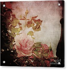 Old Fashion Rose Acrylic Print by Judy Wolinsky