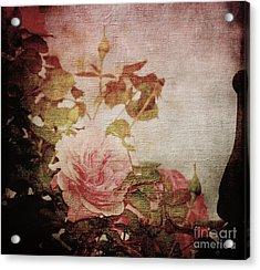 Old Fashion Rose Acrylic Print