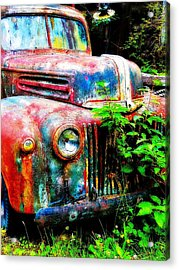 Old Ford #2 Acrylic Print by Sandy MacGowan