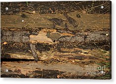 Old Forest Boards Acrylic Print by Jolanta Meskauskiene