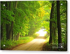 Old Forest Road In Autumn Acrylic Print