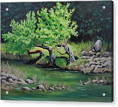 Acrylic Print featuring the painting Old Friends by Karen Ilari
