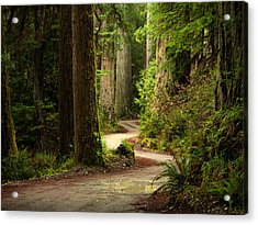 Old Growth Forest Route Acrylic Print by Leland D Howard
