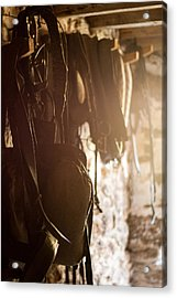 Old Harness Acrylic Print