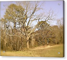 Old Haunted Tree Acrylic Print by Amazing Photographs AKA Christian Wilson
