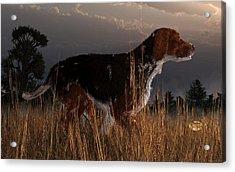 Old Hunting Dog Acrylic Print by Daniel Eskridge