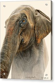 Old Lady Of Nepal 2 Acrylic Print by Aaron Blaise
