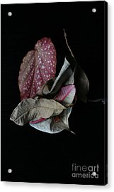 Old Leaves. Acrylic Print by Tanya Polevaya