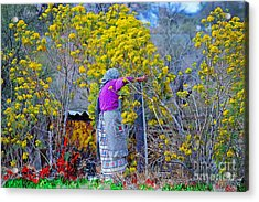 Old Mexican Woman Gathering Flowers Acrylic Print