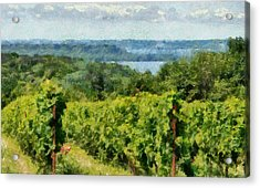 Old Mission Peninsula Vineyard Acrylic Print by Michelle Calkins