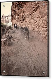Old Mule Train Acrylic Print by Stellina Giannitsi