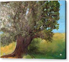 Old Oak Acrylic Print by Andrea Friedell