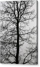 Old Oak In The Grey Sky.  Acrylic Print by Tanya Polevaya