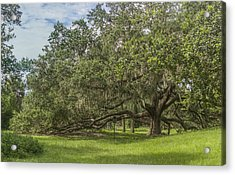 Acrylic Print featuring the photograph Old Oak Tree by Jane Luxton