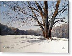 Old Oak White Road Acrylic Print